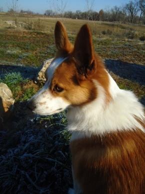 Shala's dog Theo